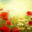 Grunge poppies background — Stok Fotoğraf #9142940