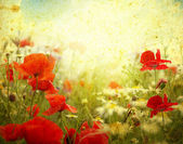 Grunge poppies background — Stok fotoğraf