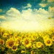 Sunflowers on a grunge background - Stock fotografie