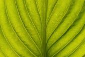 Grünes blatt — Stockfoto