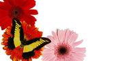蝴蝶 — 图库照片
