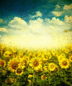 Sunflowers on a grunge background — Stock Photo