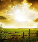 çim ve gün batımı — Stok fotoğraf