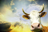 Cow on sky — Stockfoto