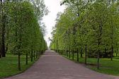 Lower park — Стоковое фото