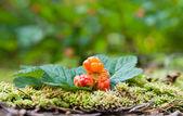 Rubus chamaemorus sobre un fondo verde fuera de foco. frutas silvestres — Foto de Stock