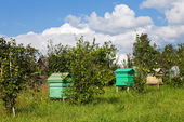 Summer landscape with honey bee hives — Stock Photo