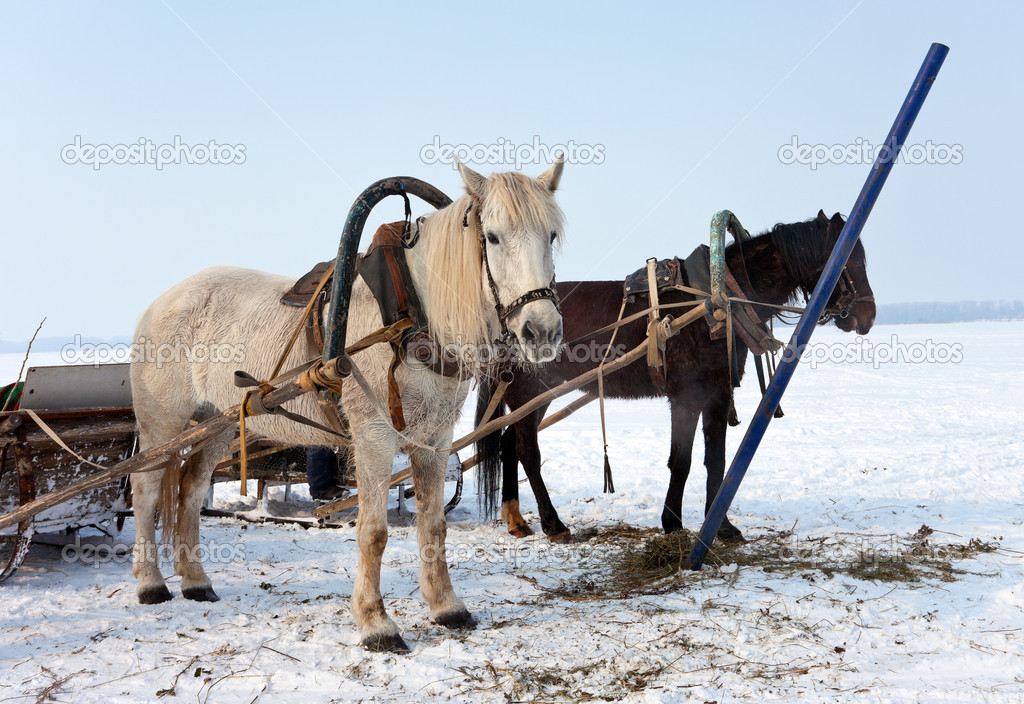 Two horses at the bank of a frozen river in Russia  Stock Photo #9424167