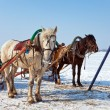 Royalty-Free Stock Photo: Two horses at the bank of a frozen river in Russia