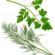Sprig of parsley and dill — Stock Photo #8365905