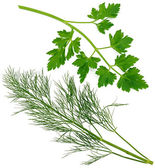 Sprig of parsley and dill — Zdjęcie stockowe