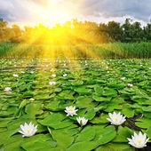 Sunrise over a spring lake — Stock Photo