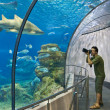 Foto Stock: Photographer in BarcelonAquarium. Spain