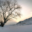 Lone standing sunset winter tree — Stock Photo