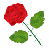 Red rose on white background — Stock Vector