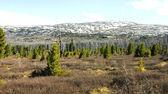 Berg toendra door lente — Stockfoto