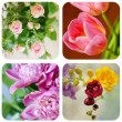 Beautiful spring flowers — Stock Photo