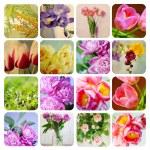 Beautiful spring flowers — Stock Photo #9455871