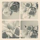 Collage with flowers — Stock Photo