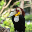 The ruffled up Toucan — Stock Photo