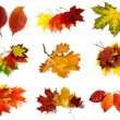 Autumnal leaves collection — Stock Photo