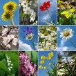 Stock Photo: Flowers collection