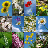 Flowers collection — Stockfoto