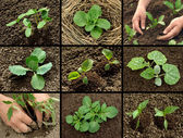 Seedlings collection — Stock Photo