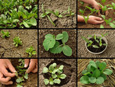 Seedlings collection — Stockfoto