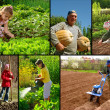 Farming collage - Stock Photo