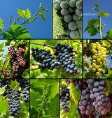 葡萄集合 — 图库照片