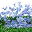 Blue spring flowers decoration — Stock Photo