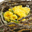 Flowers nest — Stock Photo #9688933