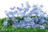 Blue spring flowers decoration — Stock Photo