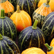 Decorative pumpkins. — Stockfoto