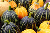 Decorative pumpkins. — Stock Photo