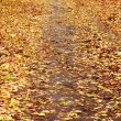 Stock Photo: Autumn park. Yellow foliage.