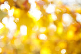 Autumnal natural background blurring — Stock Photo