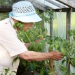 The old woman in a hothouse at bushes — Foto Stock
