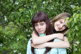 Two girls of the teenager against a blossoming pear in spring — Stock Photo
