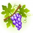Grape cluster - Image vectorielle