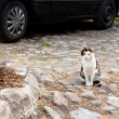 Cat and car - Stock Photo