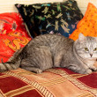 Crey tabby cat - Stock Photo