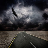 Storm, bird, road in desert — Stock Photo