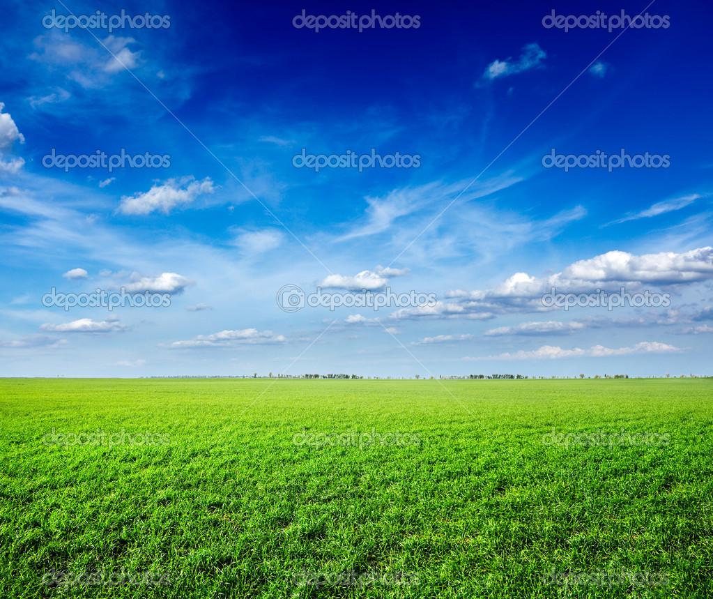 Field of green fresh grass under blue sky — Stock Photo #9530041