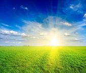 Field of green fresh grass under blue sky — Stock Photo