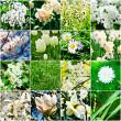 White flower collage — Stock Photo