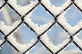 Freezing patterns, winter — Stock Photo