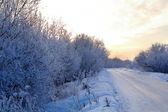 Snowy country lane. — Stock Photo