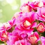 Поиск картинок на тему красивые картинки 353